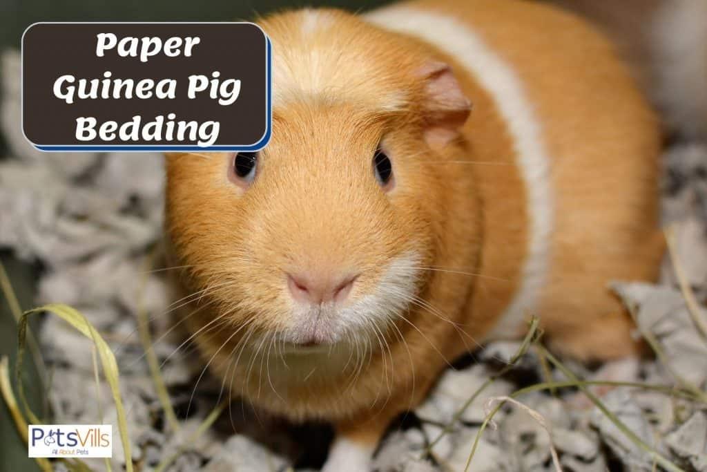 natural paper guinea pig bedding