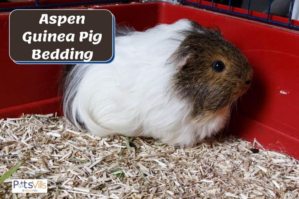 aspen wood bedding for guinea pigs
