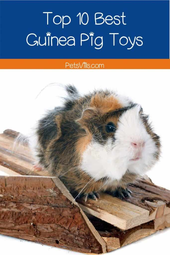 If you're looking for some of the best guinea pig toys, we've got you covered! Check out our top 10 picks!