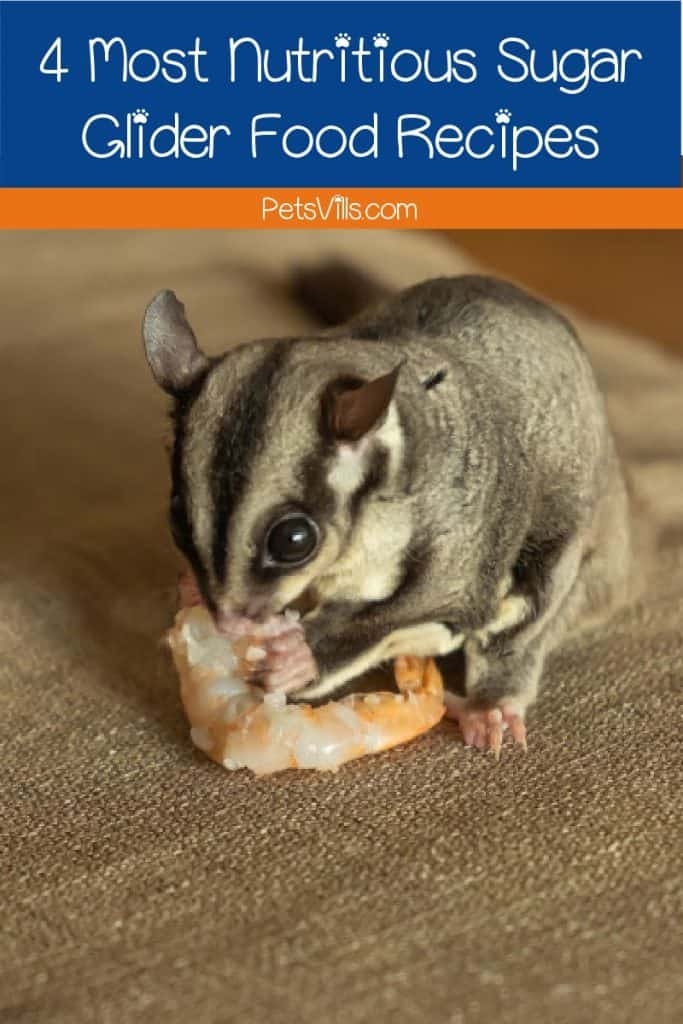 Looking for the most nutritious sugar glider food recipes ever? Check out the top 4 expert-recommended meals that just right for your glider!