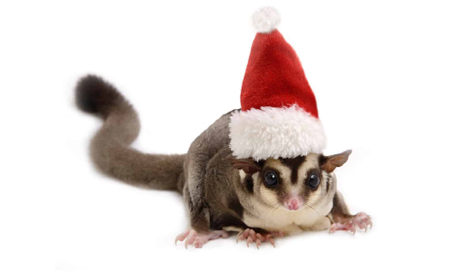 Get ready to deck the halls- and your tree- with the cutest sugar glider ornaments you ever did see! From personalized to painted, these baubles are the best!