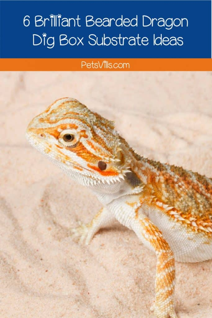 Are you planning to get a bearded dragon dig box substrate? Check this guide first to find out the substrate's types, pros & cons, and more!