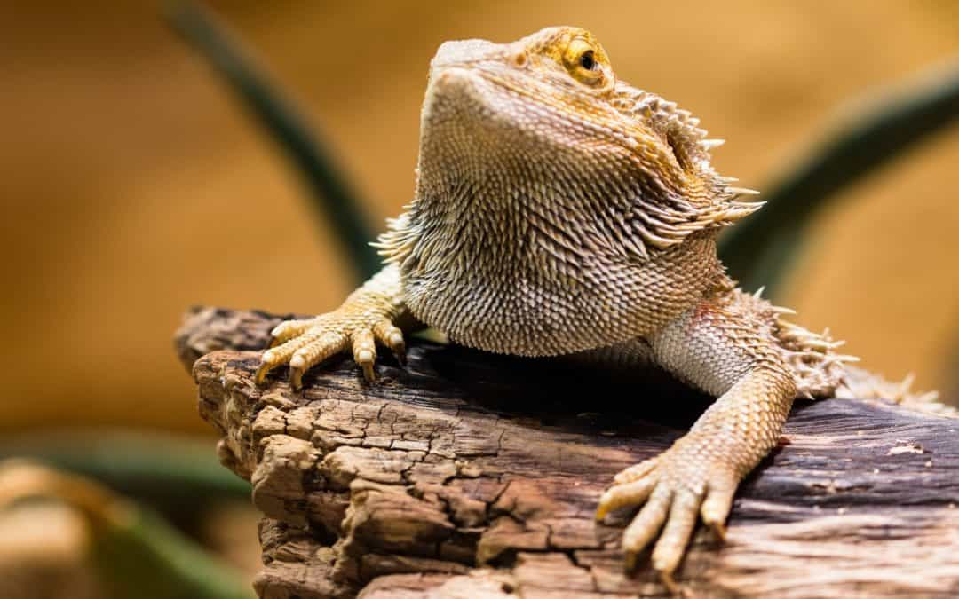 100 Remarkable Bearded Dragon Science-themed Names