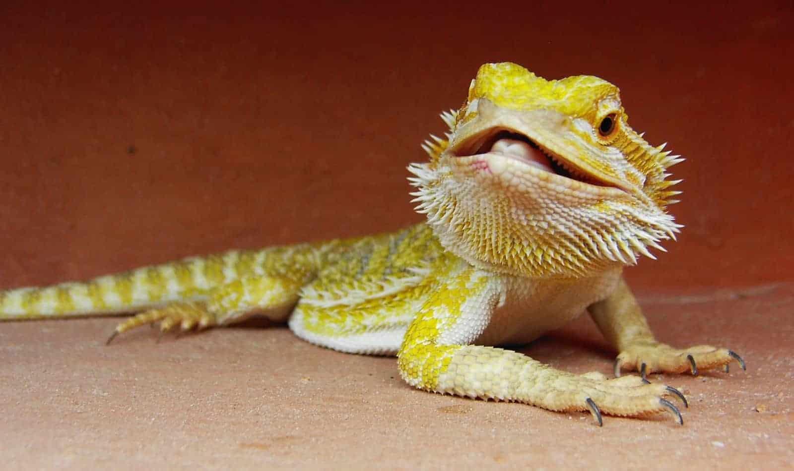 ideas for badass dragon names