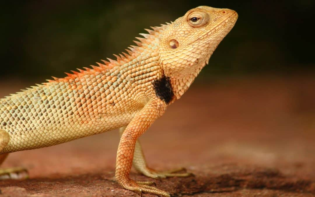 100 Astonishing Bearded Dragon Names From Movies