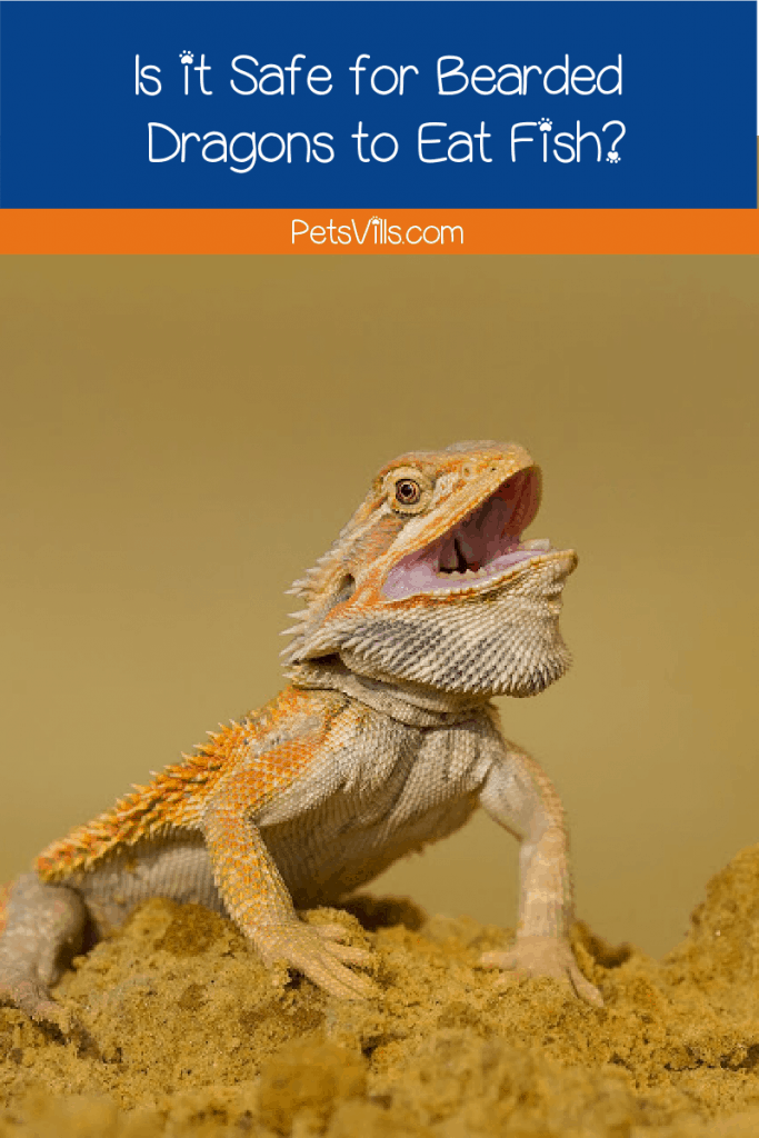 Can bearded dragon eat fish? That question will be answered now! Read on to know the right foods for your bearded dragon and what to avoid.