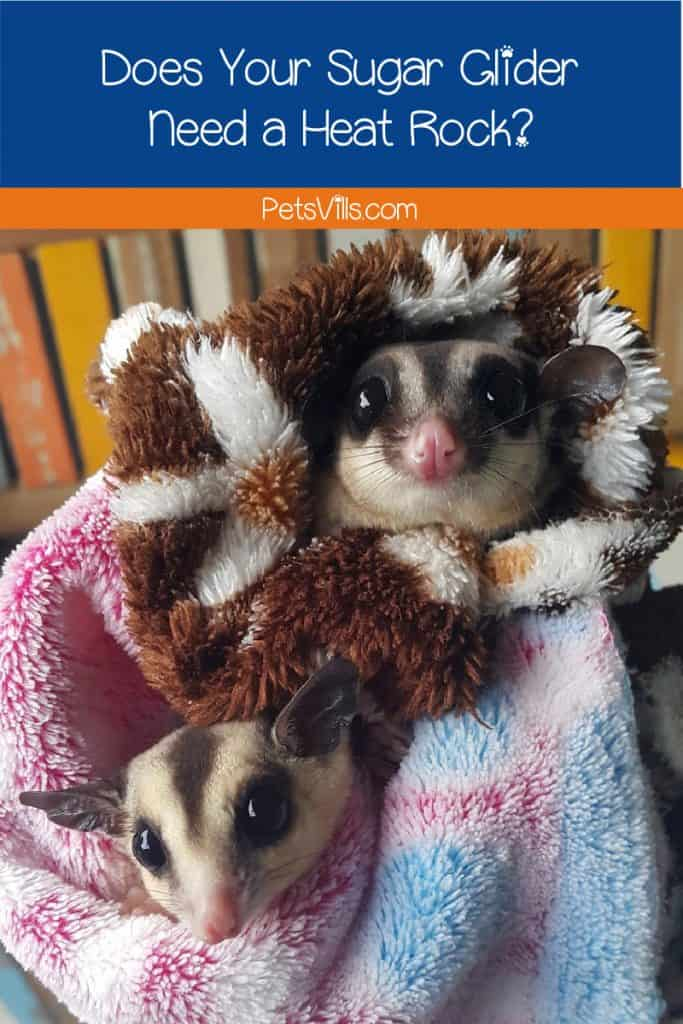 Wondering if your sugar glider needs a heat rock? We have a quick guide to help you learn the correct temperature and proper care for your pet!