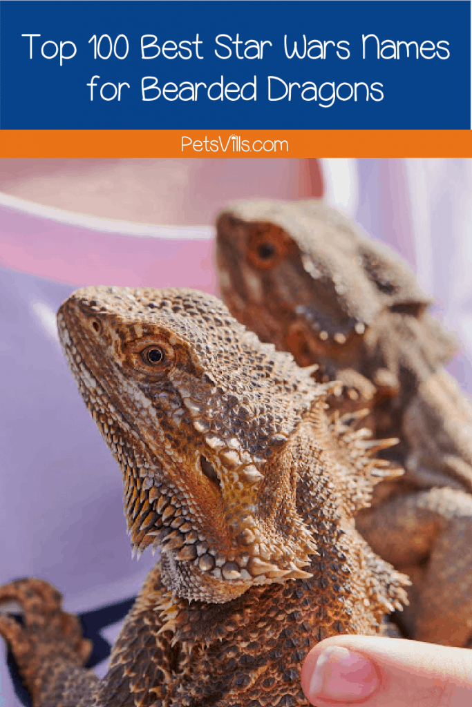 Hunting for some Star Wars bearded dragon names? You came to the right place! We've got 100 ideas for your adventurous pet. Read on!