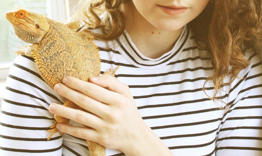 a tough bearded dragon on top on the lady's shoulder