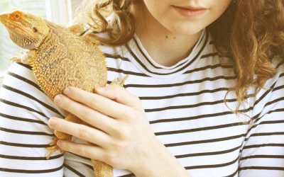100 Tough Bearded Dragon Names for Your Strong Pal