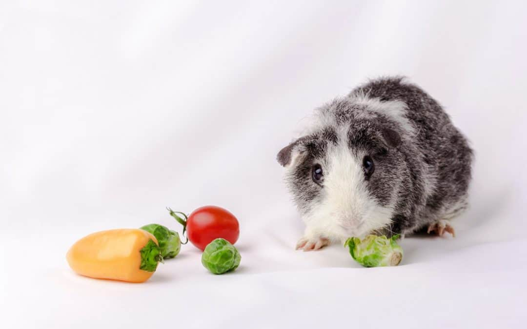 30 Safe Guinea Pig Foods to Try (& 17 That Are toxic)