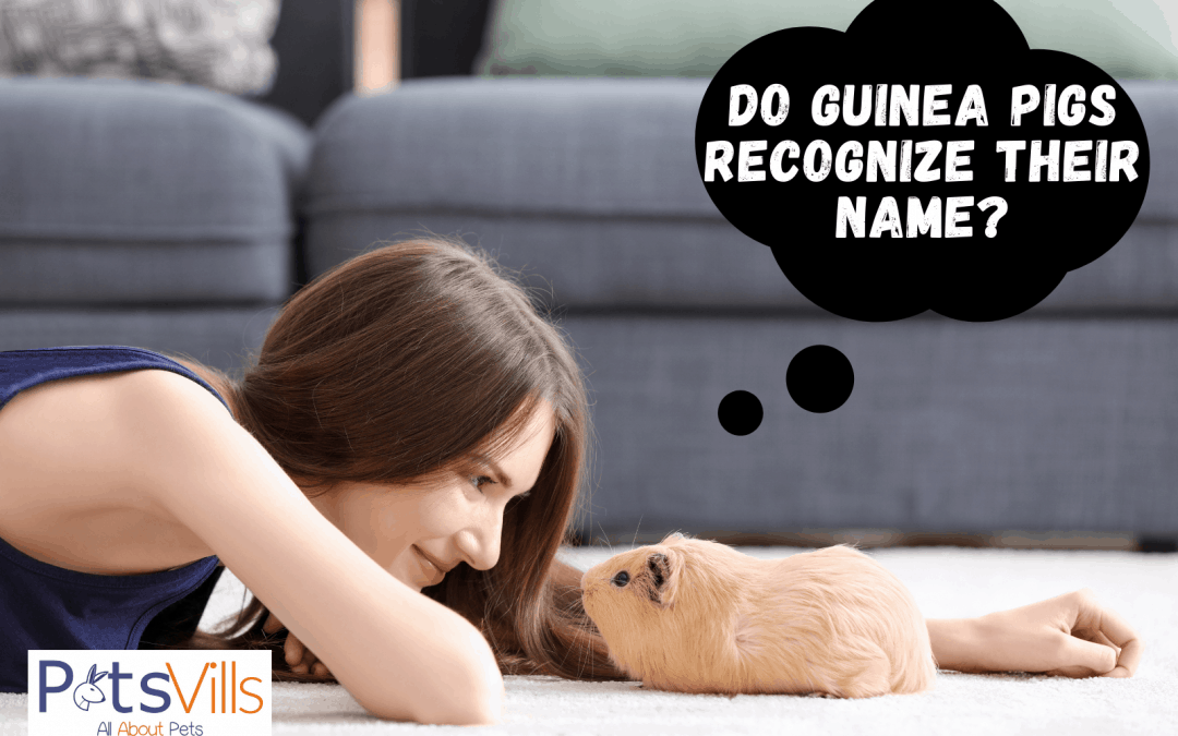 4 Signs That Your Guinea Pigs Actually Know Their Names