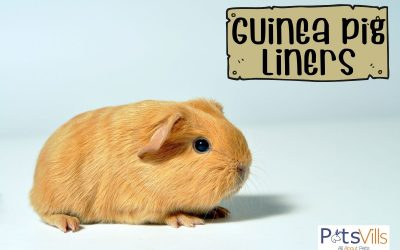 5 Best Guinea Pig Liners for Cages (2021 Reviews)