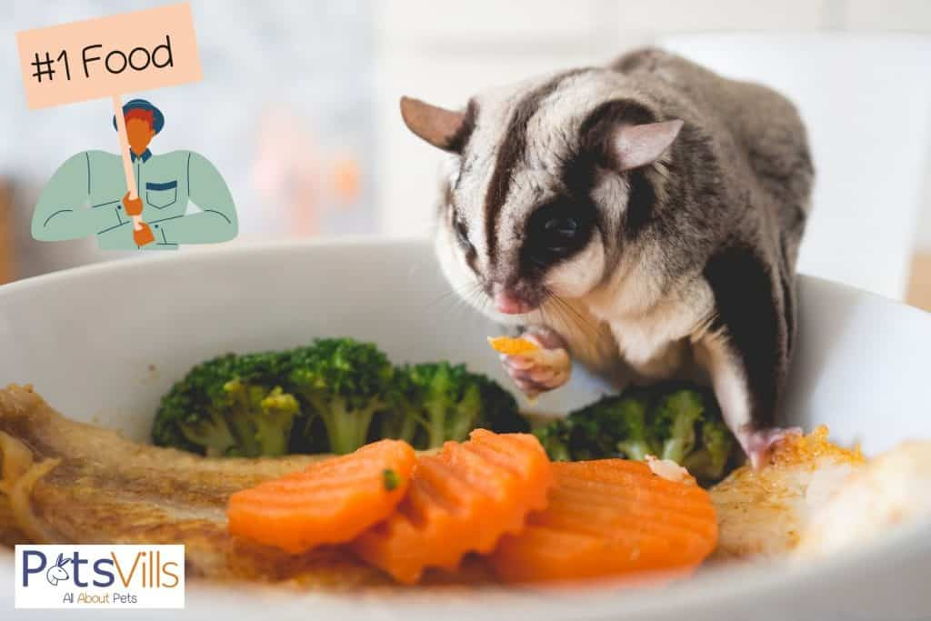 sugar glider eating vegetables