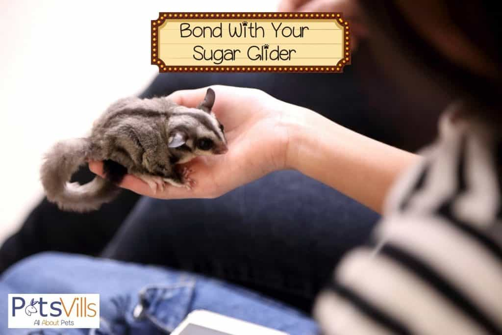 a woman bonding with her sugar glider
