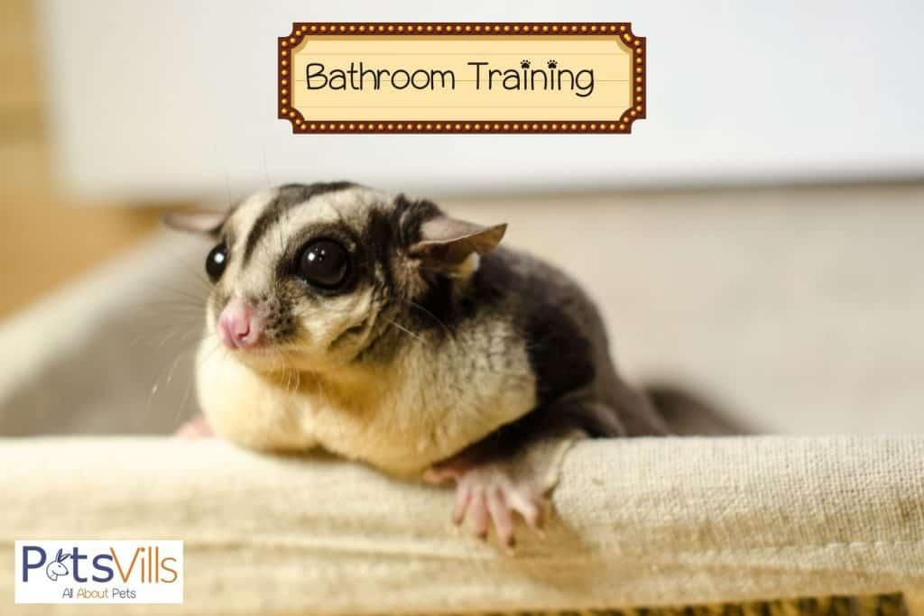 sugar glider bathroom training
