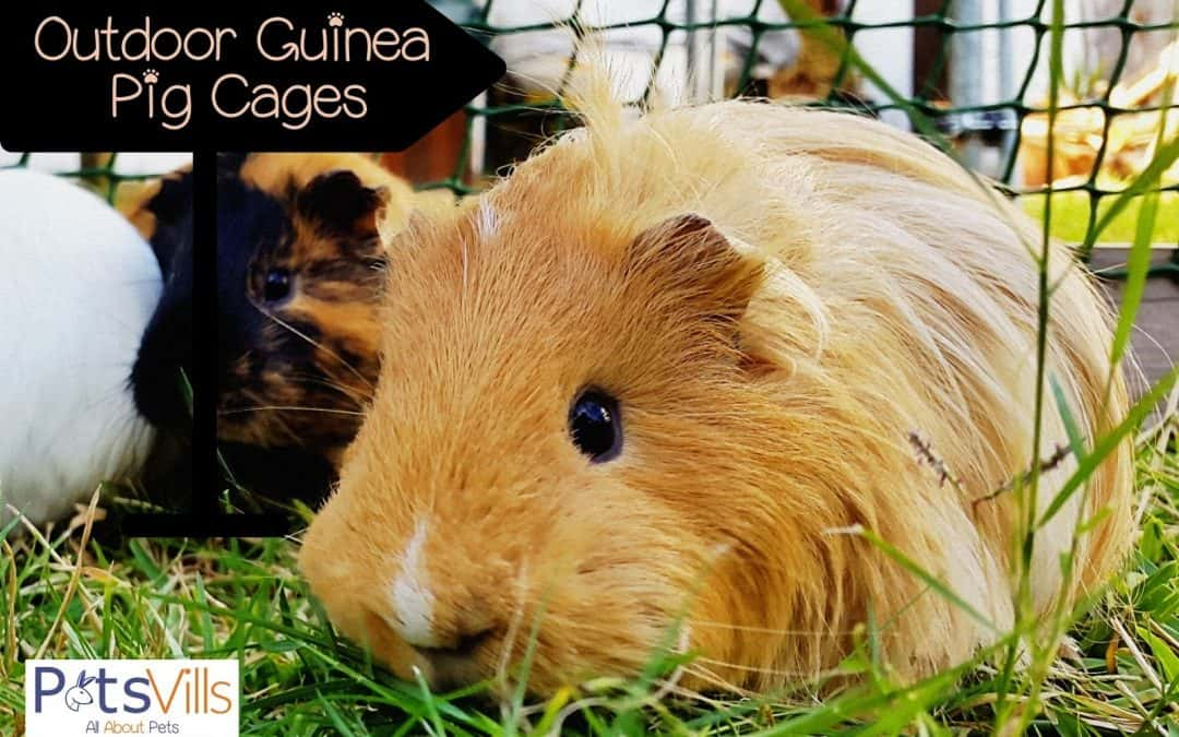 Top 5 Outdoor Guinea Pig Cages (2021 Review)