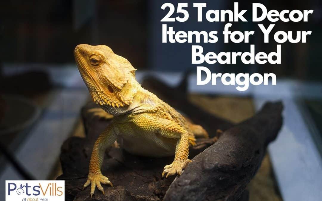 25 Creative and Useful Bearded Dragon Tank Decor Ideas