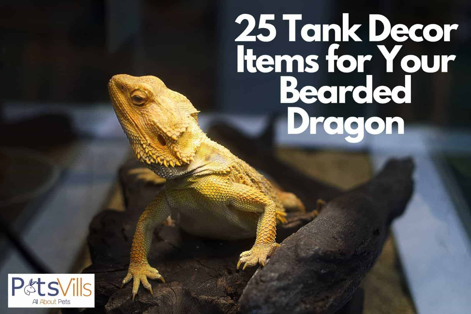 yellow bearded dragon on top of his tank decor items for bearded dragon