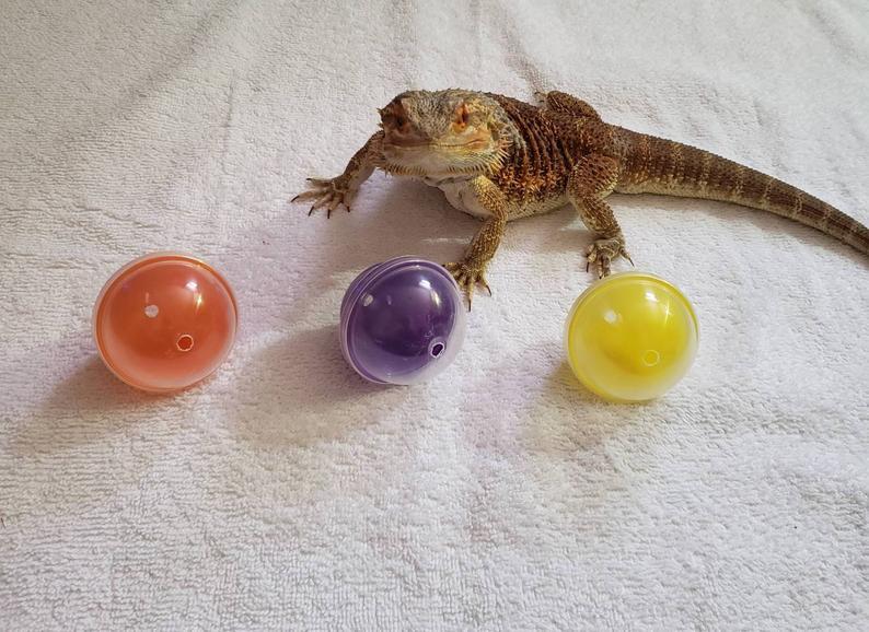 Lizard toy balls