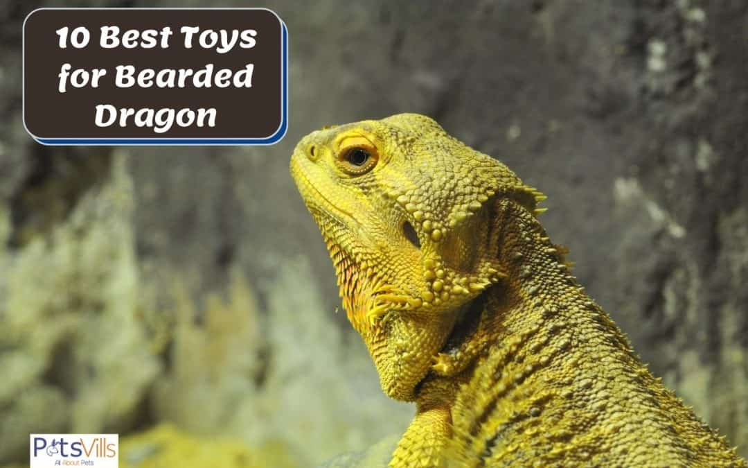 10 Best Toys For Bearded Dragons in 2021 (Review)