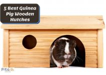 5 Best Guinea Pig Wooden Hutches & Cages (2021 Review)