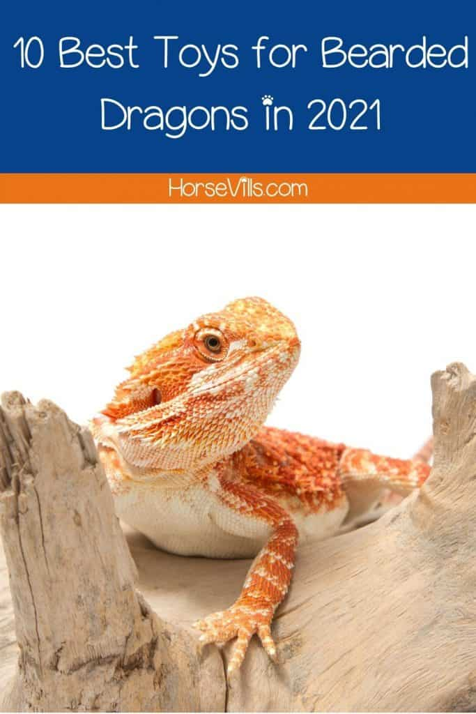 bearded dragon on top of a wood