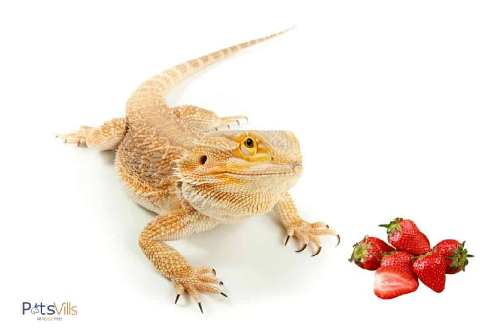 yellow bearded dragon and fresh strawberries: can bearded dragons eat strawberries?