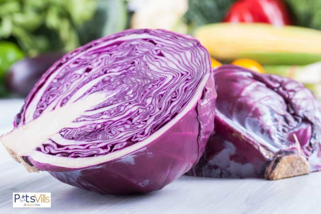 red cabbage cut in half