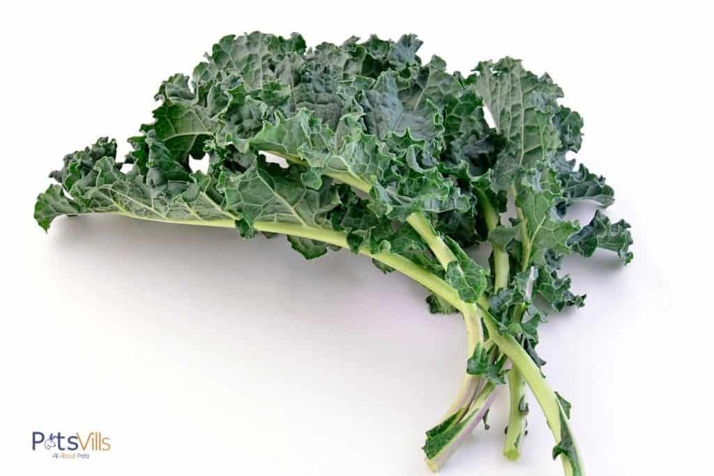 fresh kales