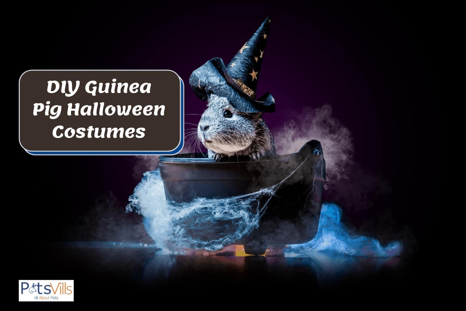 a cute gray guinea pig in a boat wearing a witch hat (How to Make Guinea Pig Halloween Costumes)