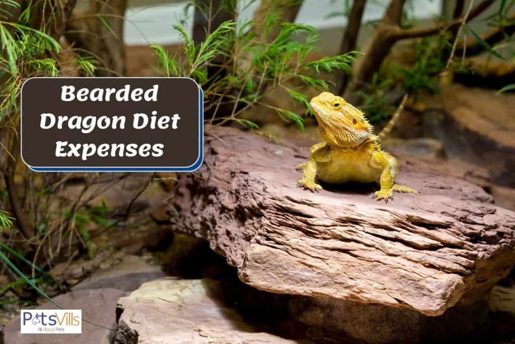 bearded dragon sitting on a rock with text