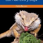a bearded dragon is about to lick a kale but can bearded dragons eat kale?