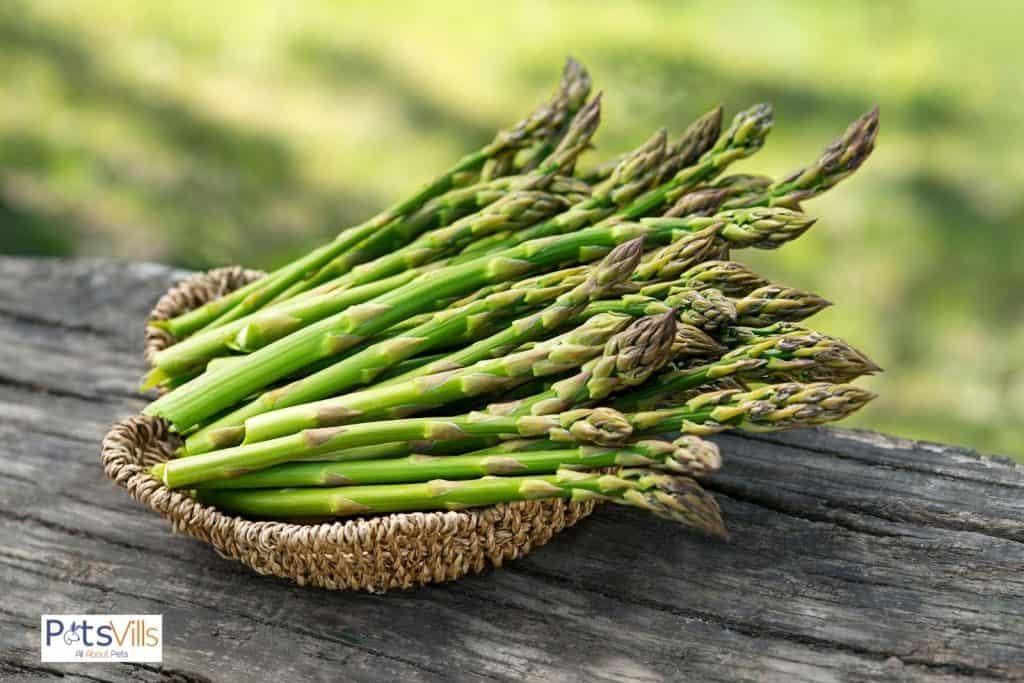 fresh harvest of asparagus in a wooden basket