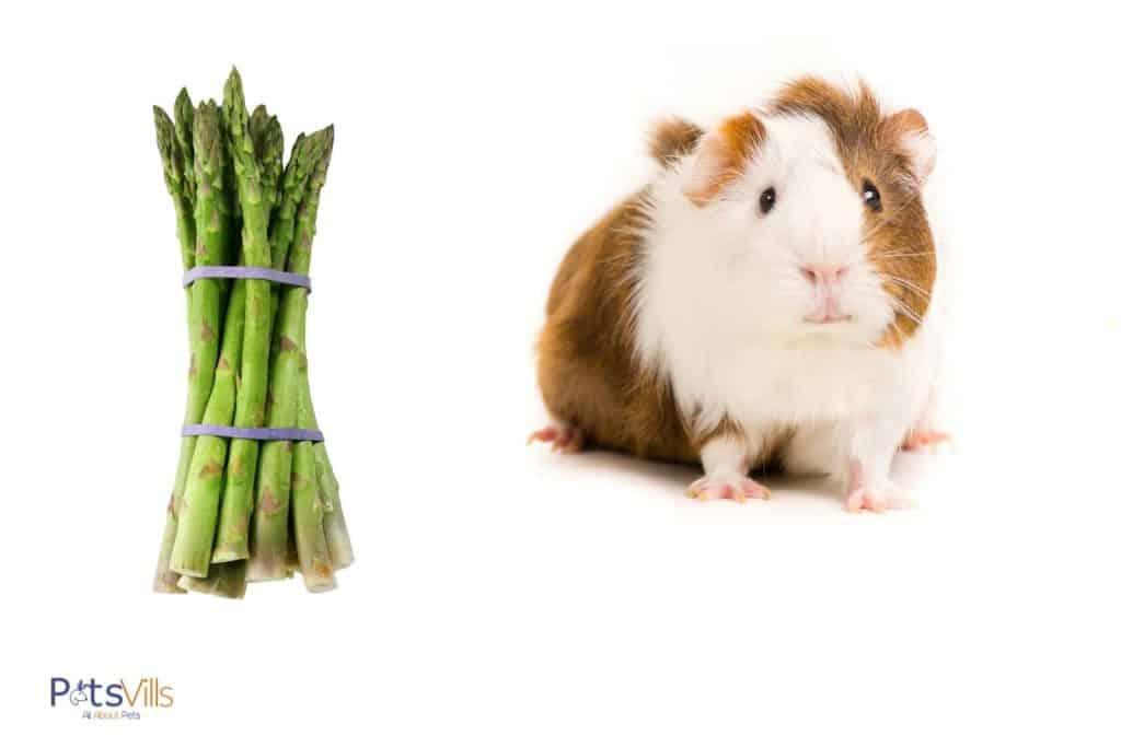 a guinea pig and tied asparagus