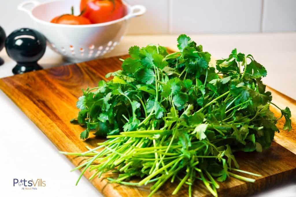 fresh cilantros on a wooden chopping board