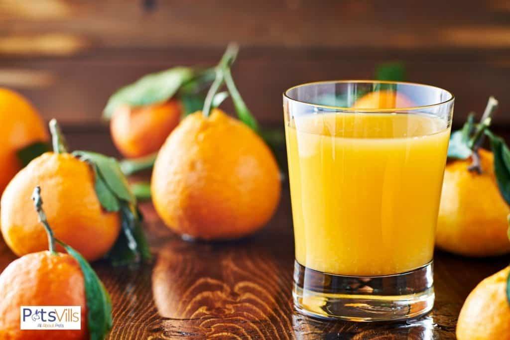 orange juice in a little glass