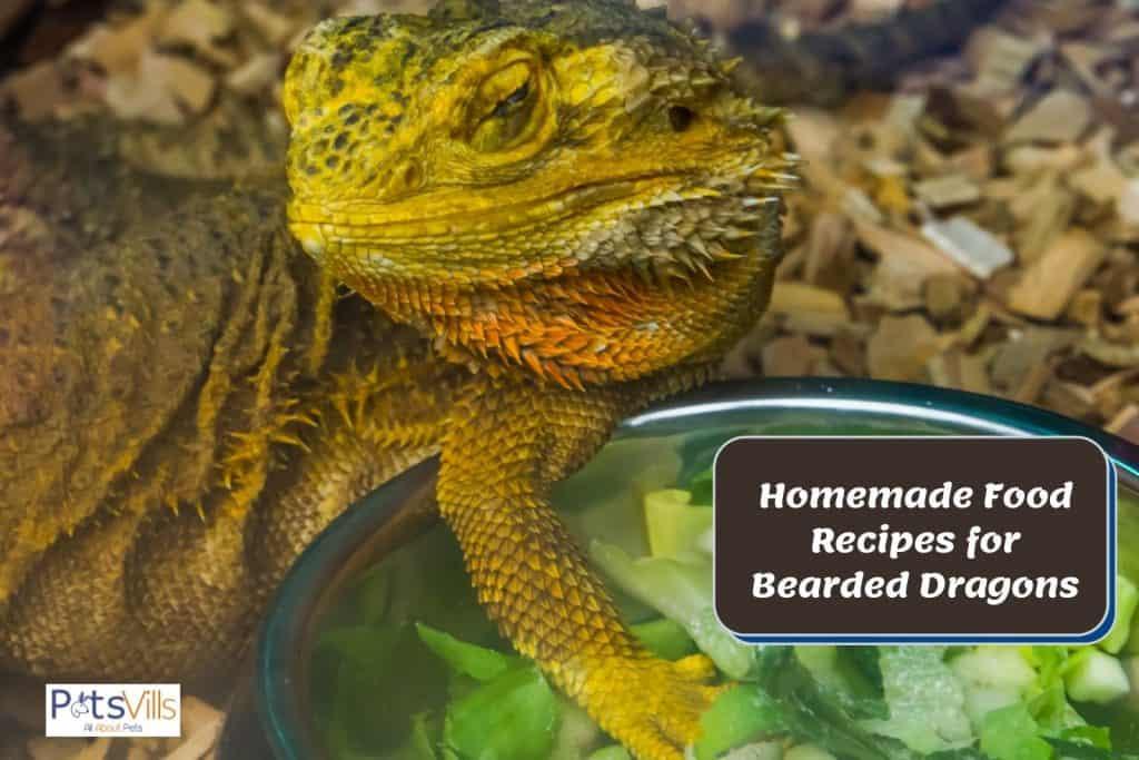 bearded dragon homemade food salad