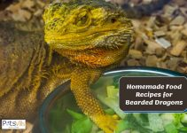 Bearded Dragon Diet Expenses You Need to Know