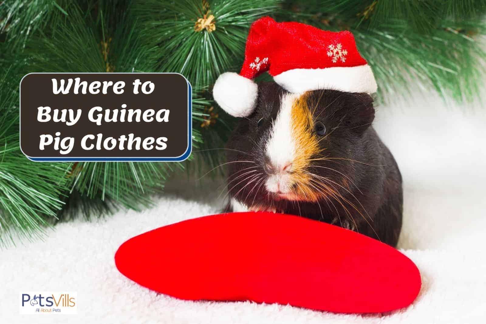 a cute guinea pig wearing a Santa hat