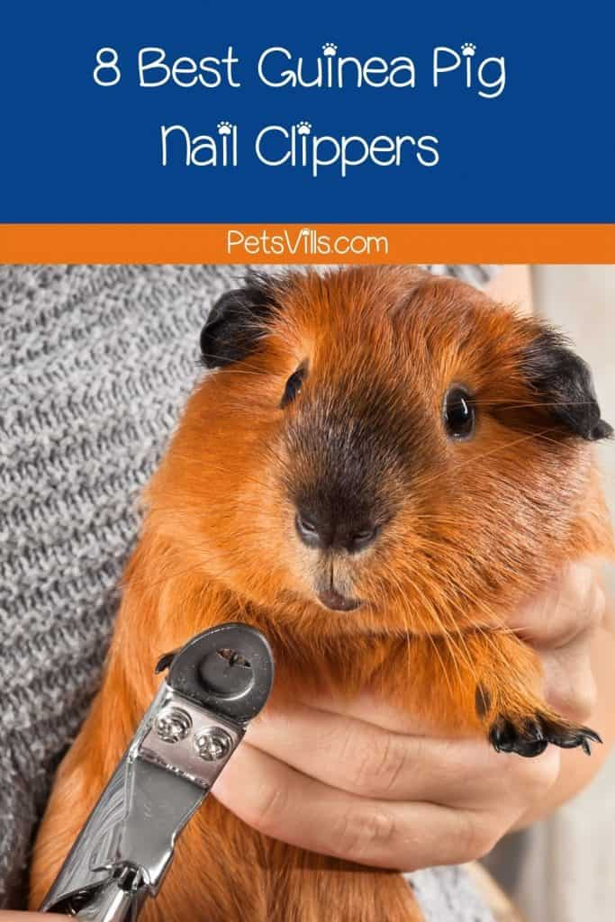 lady trimming his cavy's nails