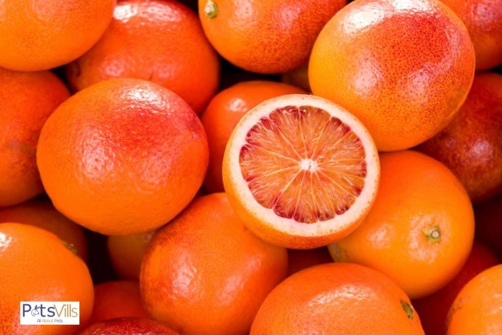 lots of bloody oranges