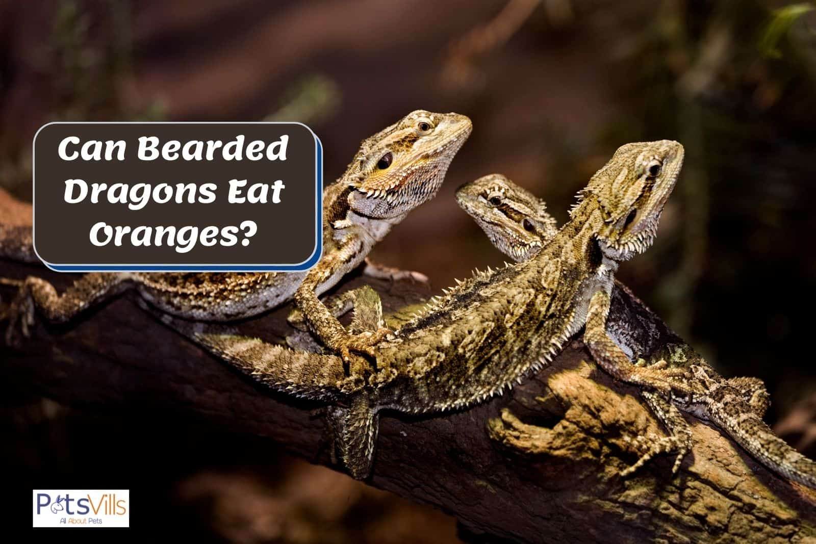 3 little baby bearded dragons on a branch of a tree