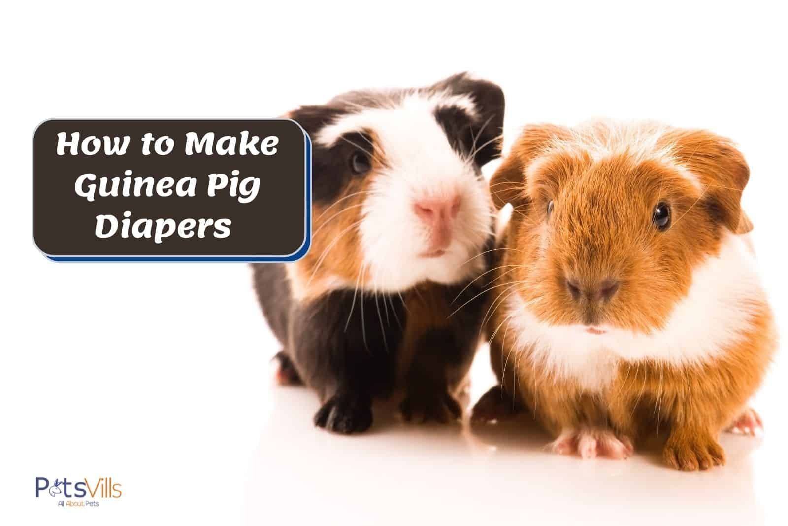 two adorable baby guinea pigs sitting beside each other: how to make guinea pig diapers for them?