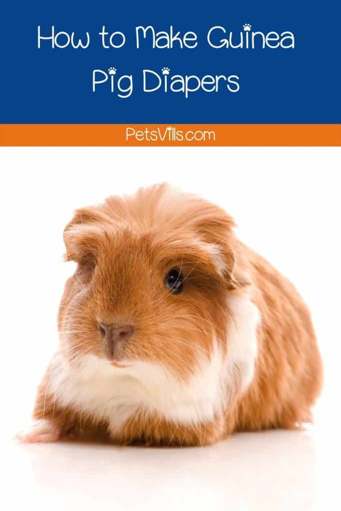 a cute brown baby guinea pig: how to make guinea pig diapers for him?