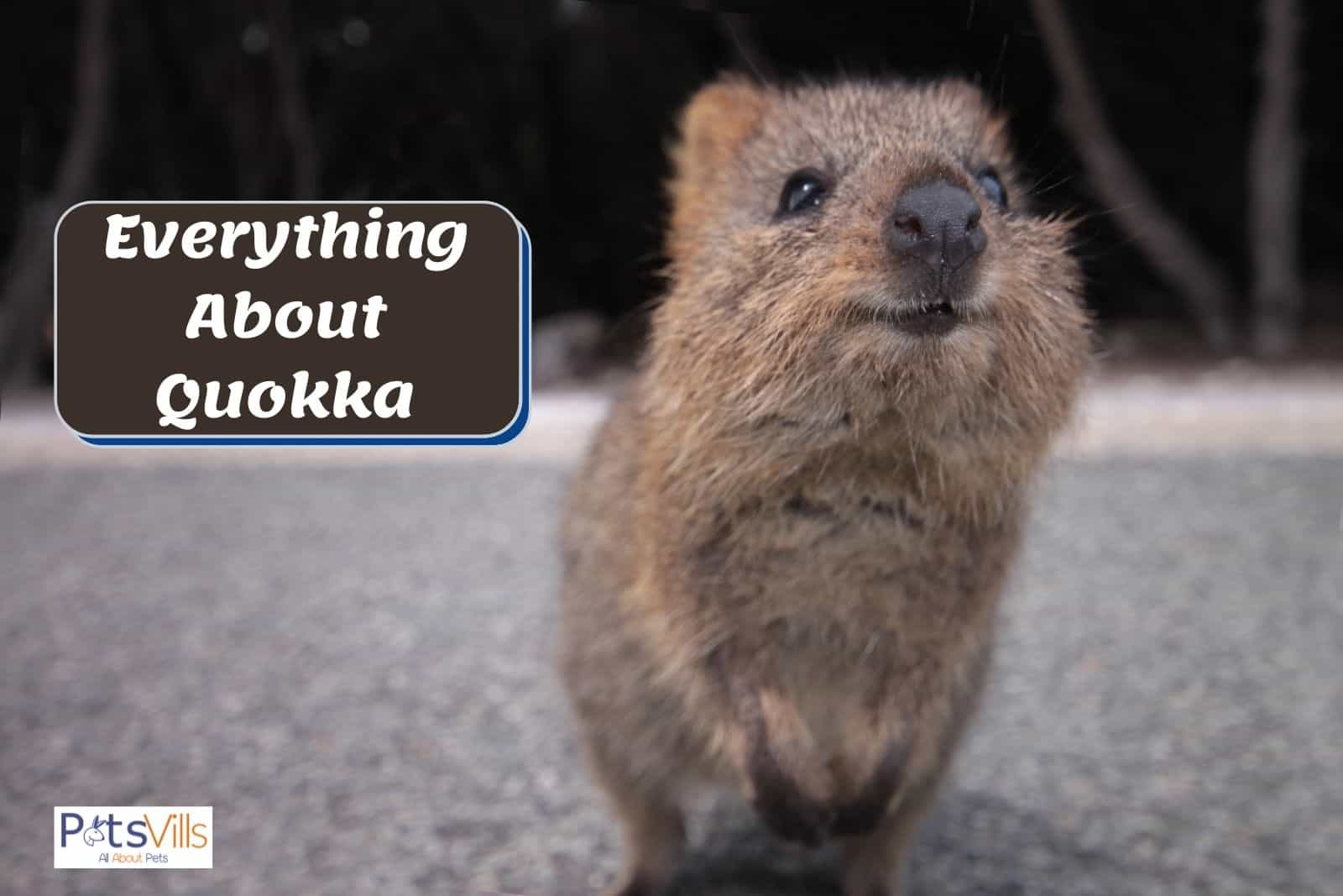 quokka with a very cute smile