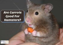 Are Carrots Good for Hamsters? Is it Safe for Them?