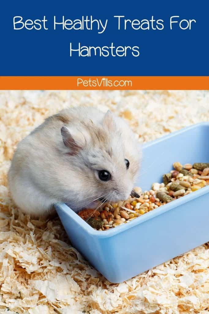 a hamster eating food from the box