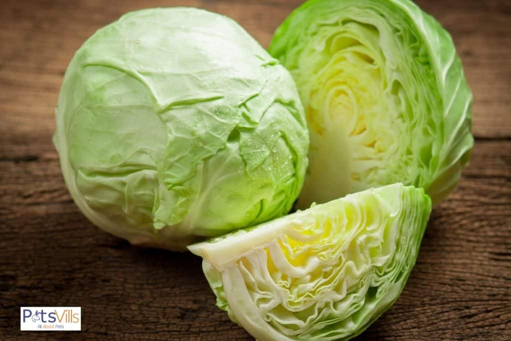 fresh cabbages for hamster