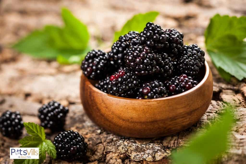 wooden bowl filled with fresh blackberries but can bearded dragons eat blackberries?
